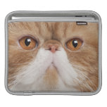 Exotic Shorthair (2,5 years old) Sleeve For iPads