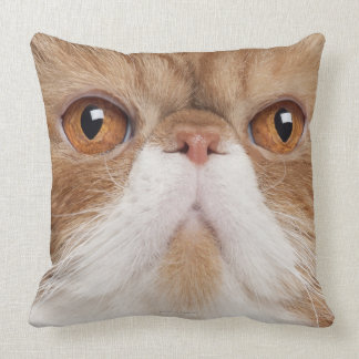 Exotic Shorthair (2,5 years old) Throw Pillow