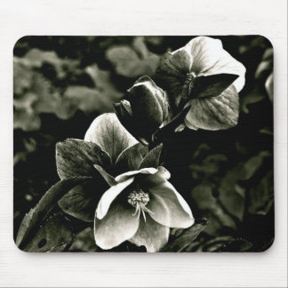 EXOTIC TREE FLOWERS IN BLACK AND WHITE MOUSE PADS