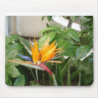 exotic tropical bird of paradise flowers mouse pad