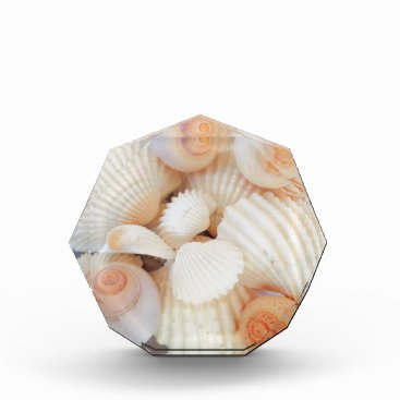 Beach Themed Exotic White Peach Sea Shells, Summer Beach Acrylic Award