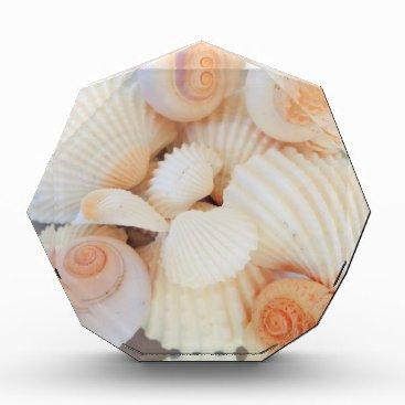 Beach Themed Exotic White Peach Sea Shells, Summer Beach Award