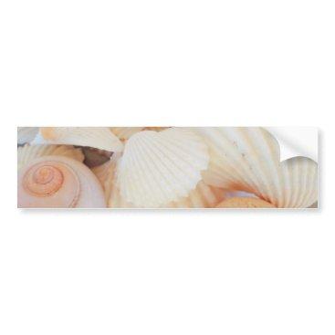 Beach Themed Exotic White Peach Sea Shells, Summer Beach Bumper Sticker