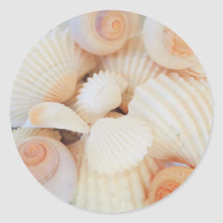 Exotic White Peach Sea Shells, Summer Beach Classic Round Sticker