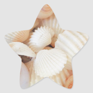 Exotic White Peach Sea Shells, Summer Beach Star Sticker