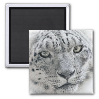 Exotic White Snow Leopard Photograph Magnet