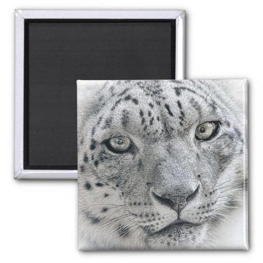 Exotic White Snow Leopard Refrigerator Magnet