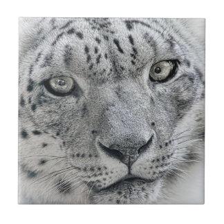 Exotic White Snow Leopard Tile