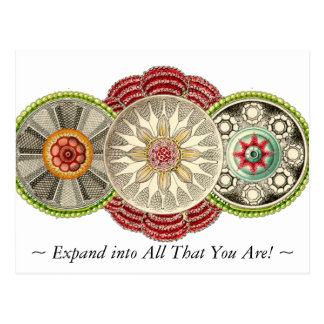 Expand into All That You Are Postcard! Postcard