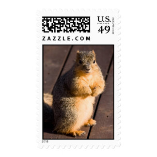 Expectant Begging Stamps