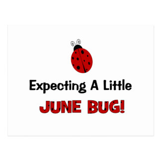 Expecting A Little June Bug Maternity Postcard