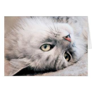 Experimente su cumpleaños como un gato tarjeta de felicitación