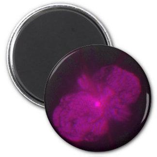 Exploding Star Eta Carinae, Seen in Three Dimensio Magnet