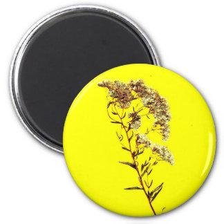 Exploración de un fondo amarillo del wildflower w  imán para frigorífico