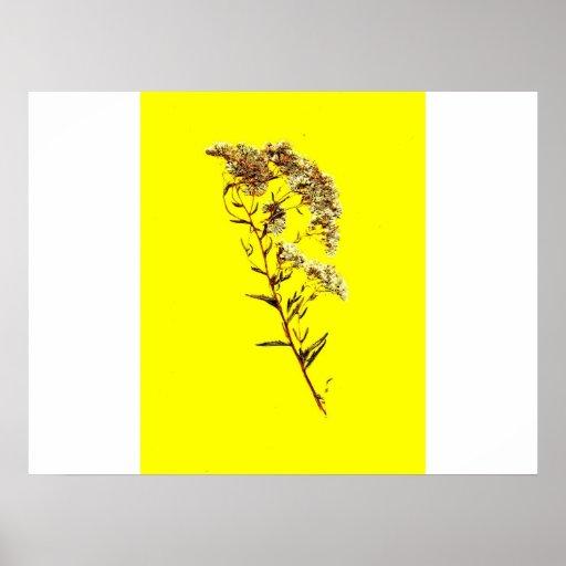 Exploración de un fondo amarillo del wildflower w  impresiones