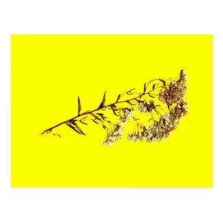 Exploración de un fondo amarillo del wildflower w postales