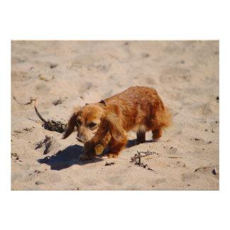 Exploración del perrito de la playa