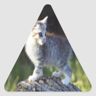 Explorer Kitty Triangle Sticker