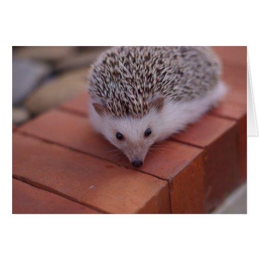 Exploring hedgehog card