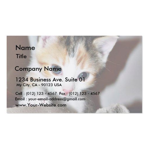 Exploring Kitten Double-Sided Standard Business Cards (Pack Of 100)