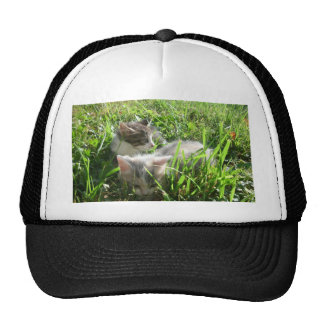 Exploring Kittens Trucker Hat