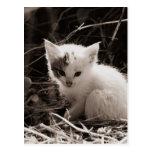 Exploring Kitty Postcard