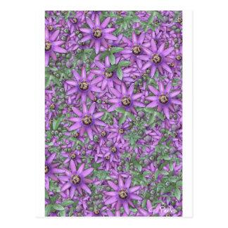 Explosión de la flor de la pasión tarjetas postales