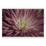 Explosión floral púrpura felicitación