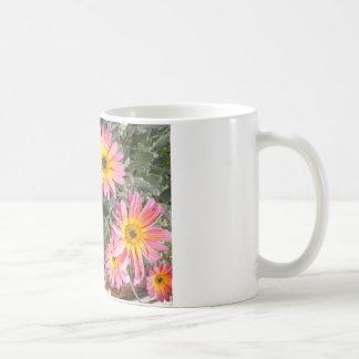 Explosión rosada y anaranjada preciosa de la flor tazas