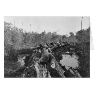 Explotando los árboles en la Florida Everglades, 1 Tarjeta De Felicitación