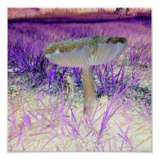 Exposed Effect Mushroom Poster
