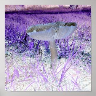 Exposed Mushroom Poster