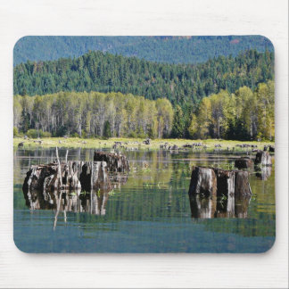 Exposed Tree Stumps on Lake Mouse Pad