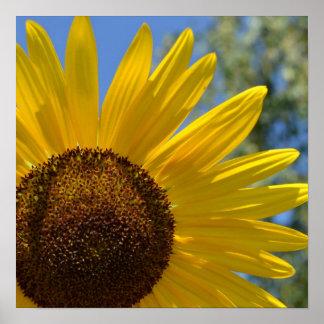 Express Love Sunflower Poster