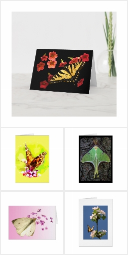 Exquisite Butterfly and Moth Blank Cards