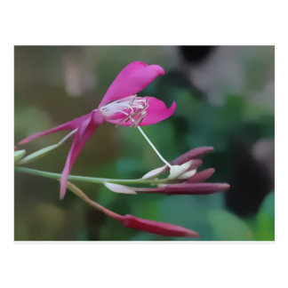 Exquisite In Pink Postcard