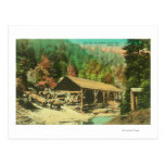 Exterior View of Saw Mill on Bodfish Creek Post Cards