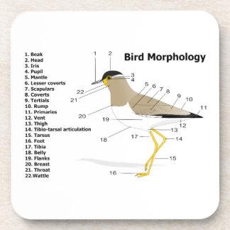 External Morphology of a Bird Vanellus Malabaricus Beverage Coasters