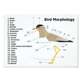 "External Morphology of a Bird Vanellus Malabaricus 3.5"" X 5"" Invitation Card"