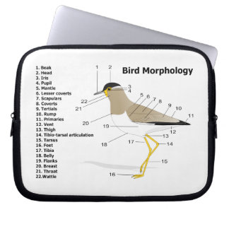 External Morphology of a Bird Vanellus Malabaricus Computer Sleeves