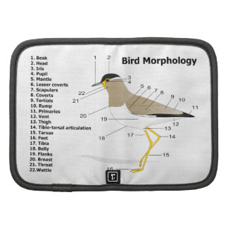 External Morphology of a Bird Vanellus Malabaricus Folio Planner