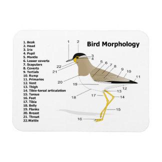 External Morphology of a Bird Vanellus Malabaricus Flexible Magnets