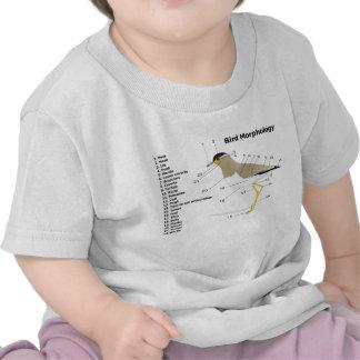 External Morphology of a Bird Vanellus Malabaricus Tee Shirts