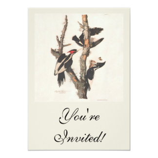 Extinct Birds: Audubon Ivory-Billed Woodpecker 5x7 Paper Invitation Card