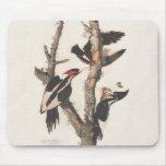 Extinct Birds: Audubon Ivory-Billed Woodpecker Mousepads