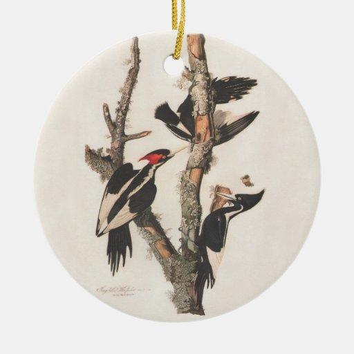 Extinct Birds: Audubon Ivory-Billed Woodpecker Christmas Ornaments