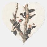 Extinct Birds: Audubon Ivory-Billed Woodpecker Heart Stickers