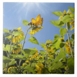 extra large bee on Sunflower Large Square Tile
