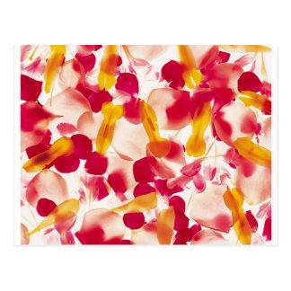 Extra Nice Flower Petals Postcard