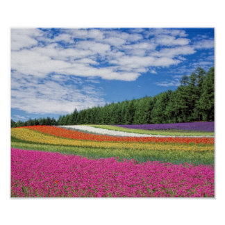"""Extra Small (16.50"""" x 11.00""""), Value Poster Paper"""